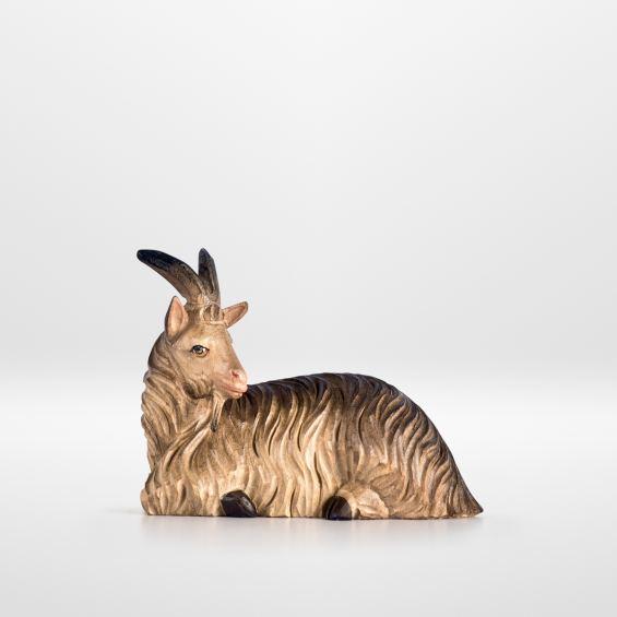 Goat (sitting)