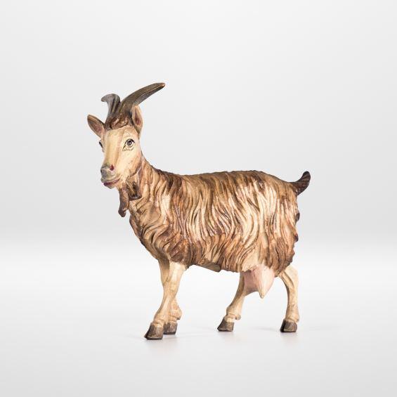 Goat (standing)