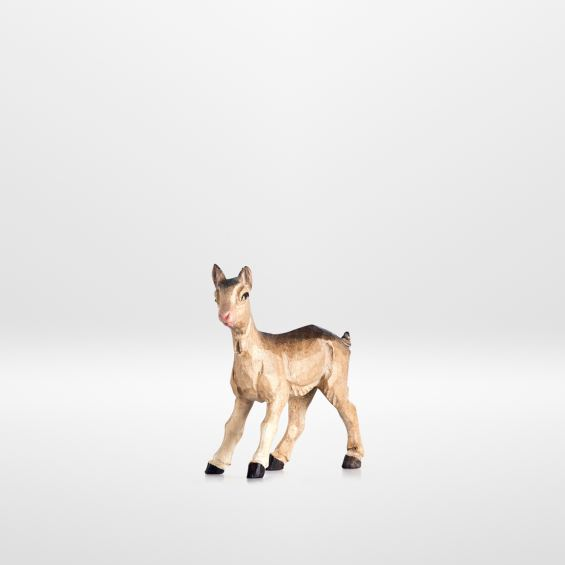 Kid goat (standing)